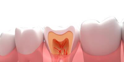 大连口腔义齿制造专业都学什么课程?